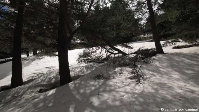 Nieve solo pisada por algún habitante del bosque