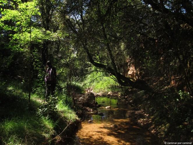 Tramo del río Sotón a su paso por Santa Quiteria