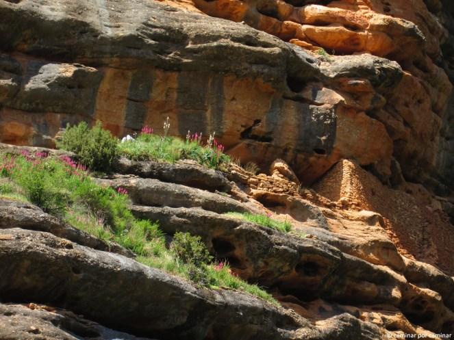 El muro de la ermita adornado con unas delicadas orquídeas