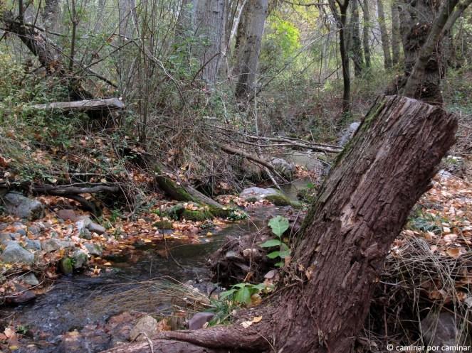 Fuente de la Carrasca, ese lugar de quietud absoluta
