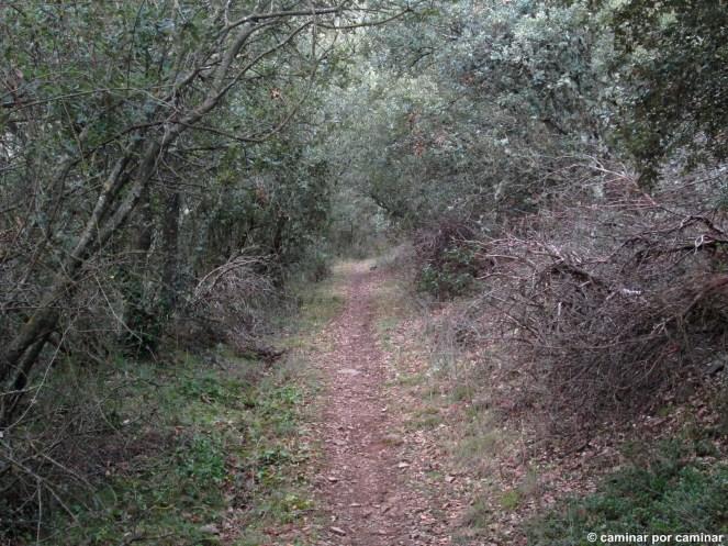La pista da paso al húmedo sendero