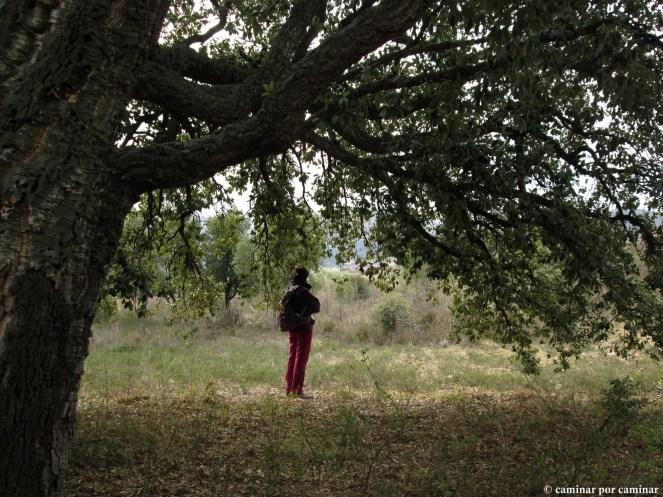 Bajo las nobles ramas del alconorque del Prado