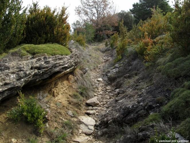 Primer tramo de la ruta por senderos como este