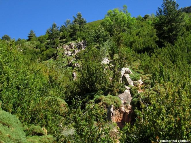 Lo que concebimos como jardín oriental, terreno de boj y erizón (será la primavera...)