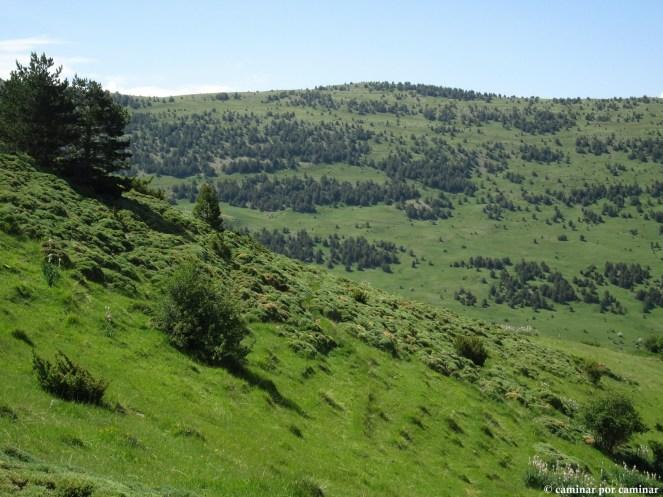 El bosque solo medra en orientaciones septentrionales; el pasto es el dueño y señor desde la Collada de Espierre
