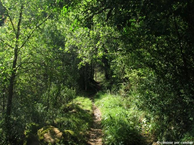 Vieja senda donde la naturaleza reclama lo que es suyo