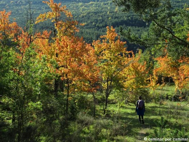 Solano de Berbusa entre antiguos campos abandonados