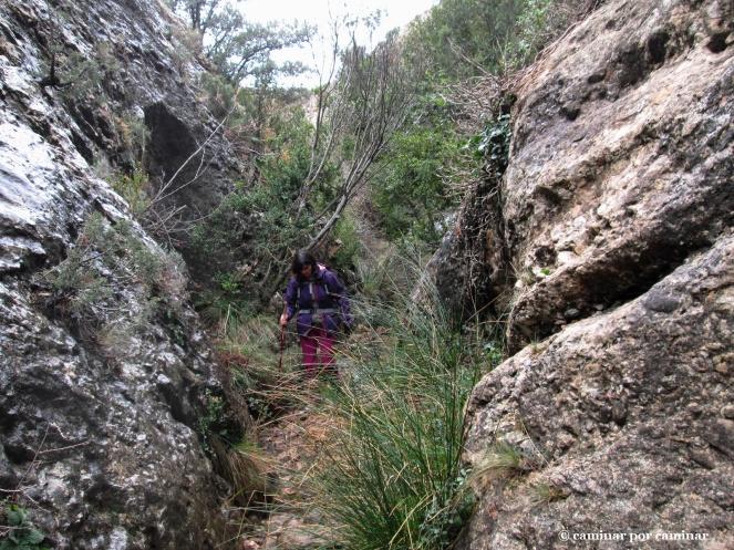 Vegetación típica de los nacimientos de agua: es la fuente de la Puerta del Cierzo