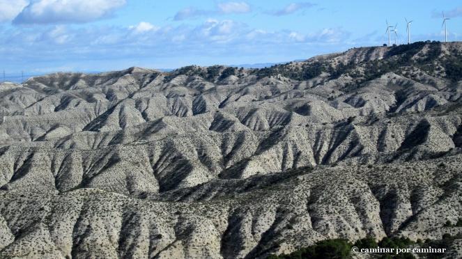 Lunares arbustivos que manchan la aridez de la estepa