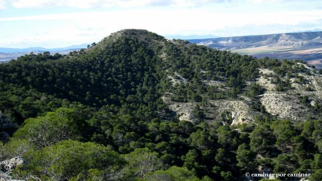 Los pinos se aferran a la vertiente norte del Cabezo Sillón