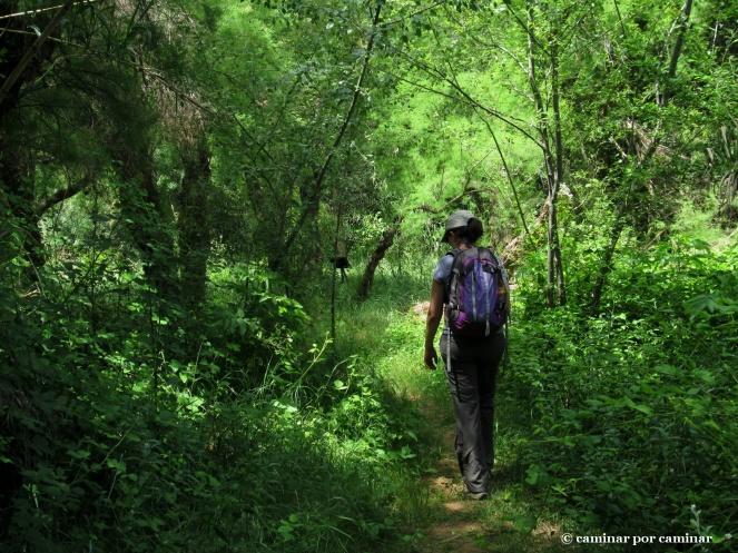 La selva del Huerva