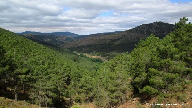 Horizontes de pinos