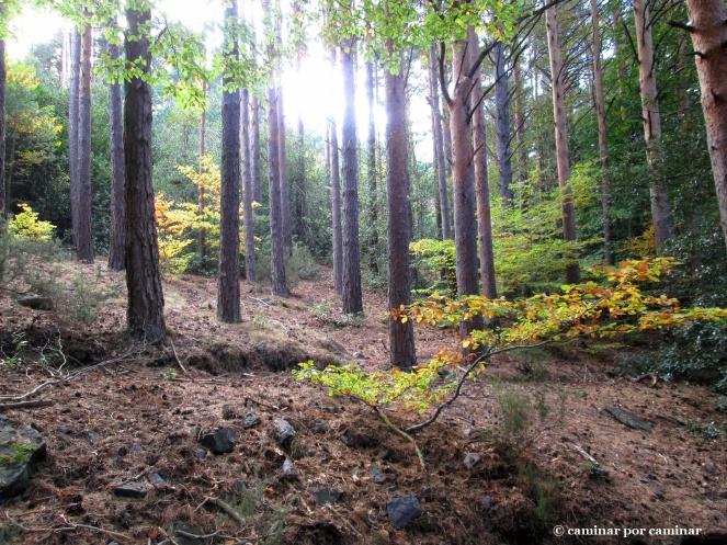 El sol crea contrastes en el bosque