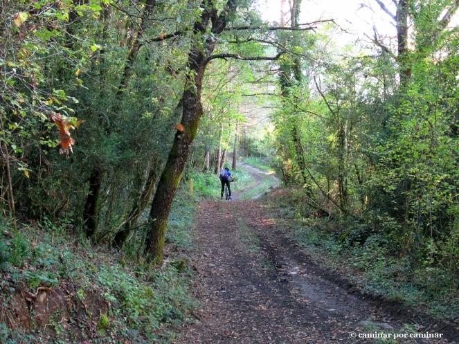 De regreso entre los bosques que descienden desde Canciás al mismo valle