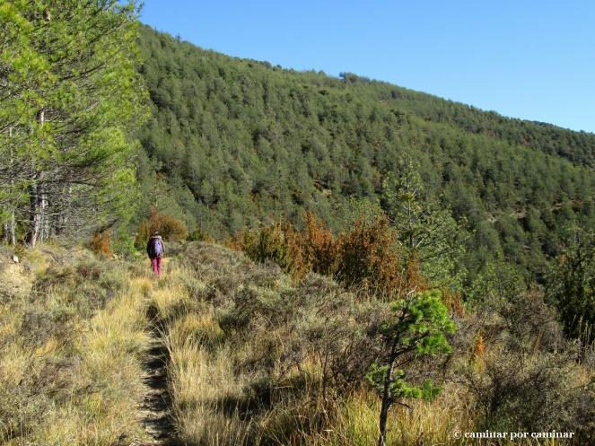Abandonamos Bergosa entre pinos