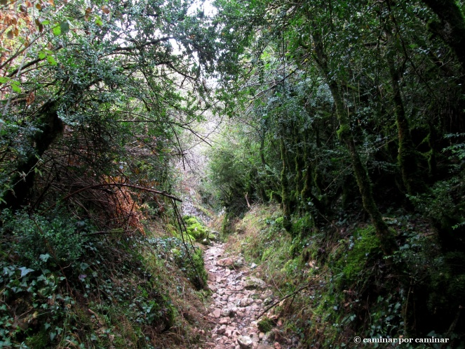 Cauce selvático del barranco de Chimiachas
