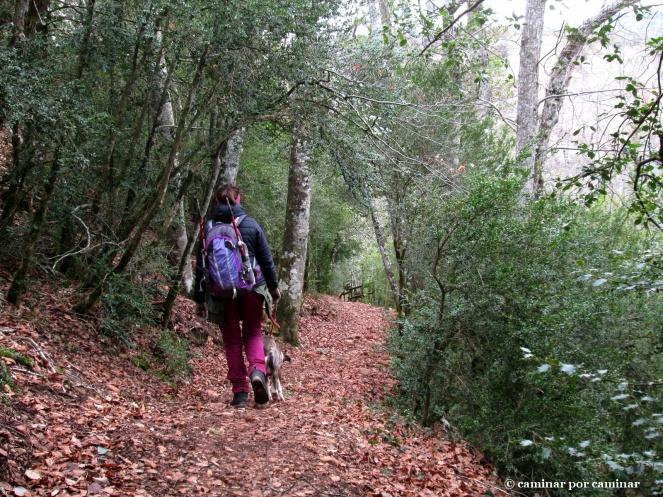 Camino umbrío hacia San Juan de la Peña