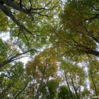 Redescubriendo el hayedo de Peña Roya en otoño