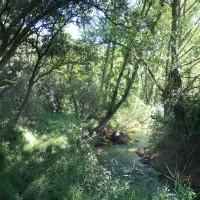 Las primeras hoces del río Huerva en Cerveruela